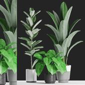 Plants 126