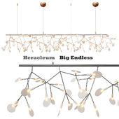 Decorative Moooi Heracleum Endless