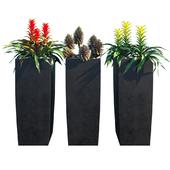 Tropical plant set