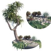 Plant on pot