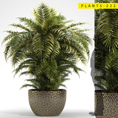 PLANTS 222