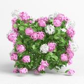 Plants Hydrangea set 08