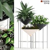 Plants collection 141 Artica