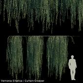 Vernonia Elliptica | Curtain Creeper V2