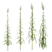Collection of plants. Cane. 4 models