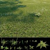 Wild grass exterior