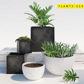 PLANTS 224