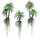 Succulents and palm tree in wall pots