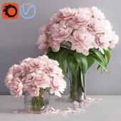 pastel pink peonies in 2 vases