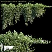 YAREENA Myoporum Parvifolium creeper | 5 module