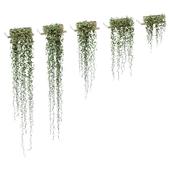 Plants on the shelves. 5 models