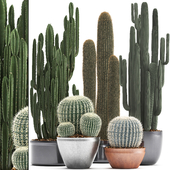 Collection of plants 300. Cactus set.