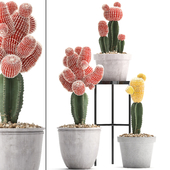 Collection of plants 304. Cactus set.