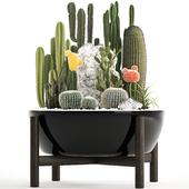 Коллекция растений 305. Cactus set.