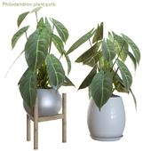 Philodendron plant pots
