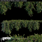 Grevillea Royal Mantle creeper | 5 module