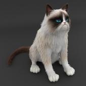 На конкурс Grumpy cat