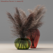 Miscathus flower in vases #2
