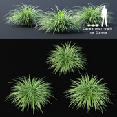 Осока Моррова | Carex morrowii Ice Dance ornamental grass