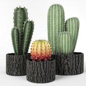 Набор кактусов в деревянных горшках