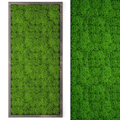 Vertical garden 24. Stabilized moss