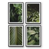 Tropical leaves | set 27