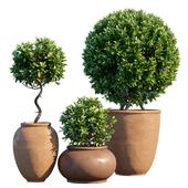 Plant in pots # 10: Mediterranean