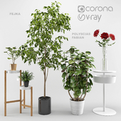 Ikea plants set