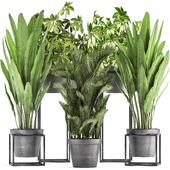 Коллекция растений 318.
