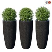 Street bushes in pots VIII