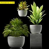 plants 230