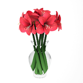 Hippeastrum (Amaryllis) bouquet red.