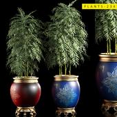 plants 234