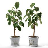 Set of plants 05
