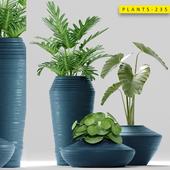 Plants 235