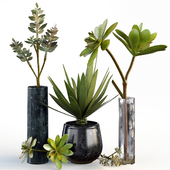 Plants collection 08