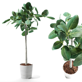 Set of plants 06
