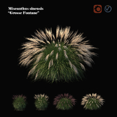 "Miscanthus sinensis ""grosse fontane"""