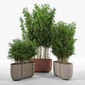 CASSERO LONG Bambus Muriel