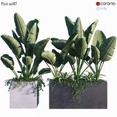 Plant set # 2
