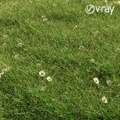 Brilliant grass