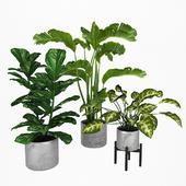Plant Set 2