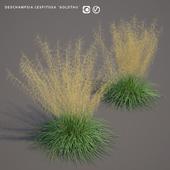 Щучка дернистая Луговик | Deschampsia cespitosa goldtau