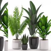Plants 136