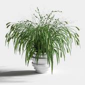 Букет из травы