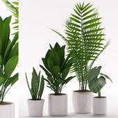 Plants 137