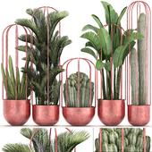 Коллекция растений 326.