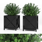 Plant in pots outdoor