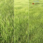 arch_grass