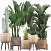 Коллекция растений 338.